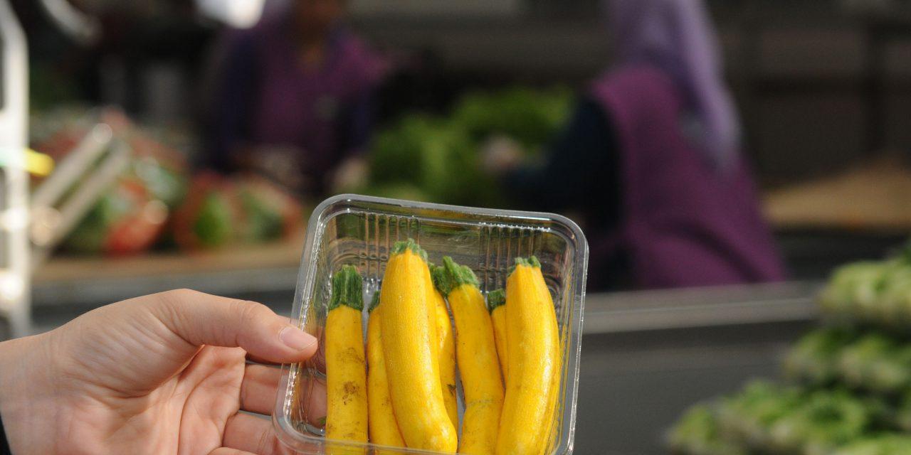 Minyatür Sebzeler İhraç Ediliyor
