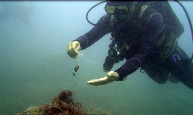 Kurşun ağırlıklar deniz yaşamını tehdit ediyor
