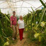 """Emekli Öğretmen Çift """"Ejder Meyvesi"""" Üretimi ile Girişimcilere Örnek Oluyor"""