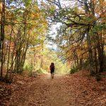 Türkiye'nin tek kasnak meşesi ormanına randevusuz giriş yasak