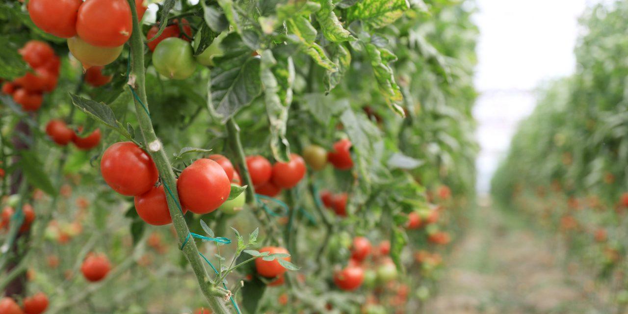 Tarım Ürünleri Üretici Fiyat Endeksi yıllık %20,76, aylık %3,52 arttı