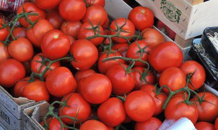 antalya yaş sebze ve meyve ihracatı alarm veriyor